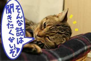 a_20121118061113.jpg